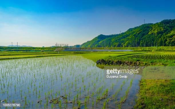 japanese countryside at kyoto , japan - 水田 ストックフォトと画像