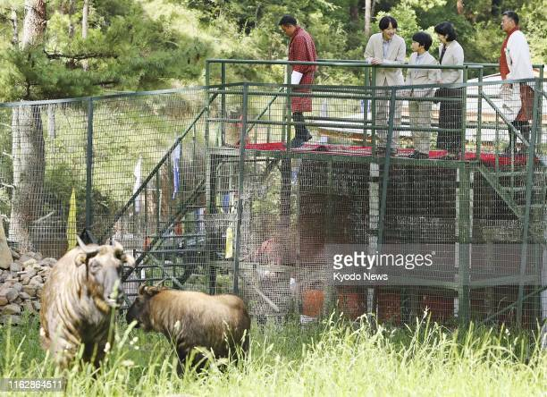 Japanese Crown Prince Fumihito , Crown Princess Kiko and their son Prince Hisahito look at a farm, where takins are on the loose, in Thimphu, Bhutan,...