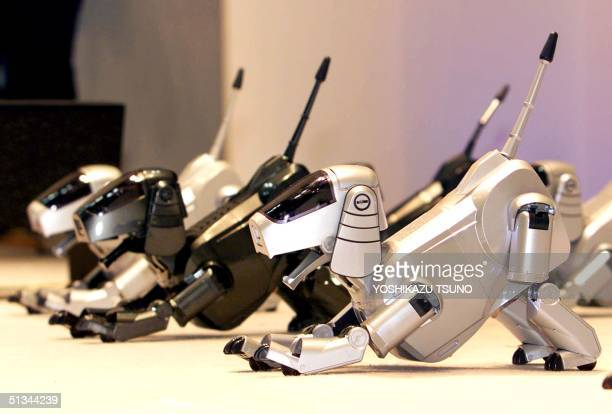 Japanese electronics giant Sony's pet robot Aibo dogs raise their tails and stretch their bodies to show their performance during a hightech...