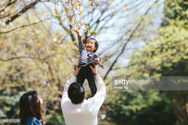 Japanese family enjoying under sakura tree