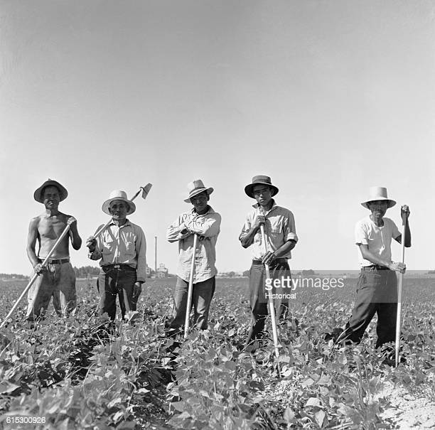 Japanese farm workers standing in the fields of a Farm Security Administration camp in Twin Falls County Idaho July 1942