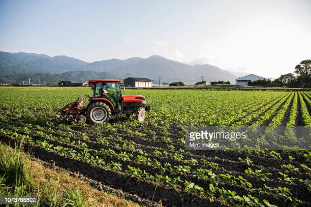 japanese farmer driving red tractor through a field of soy bean plants. - tractor stock pictures, royalty-free photos & images