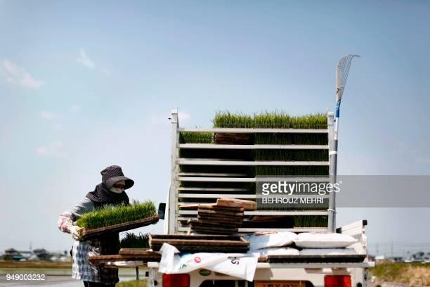 Japanese farmer Toshiko Ogura prepares rice seedling trays to plant on her paddy in Kazo city Saitama prefecture on April 20 2018