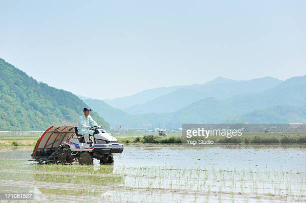 japanese farmer working in rice planting in hyogo - satoyama scenery stock pictures, royalty-free photos & images