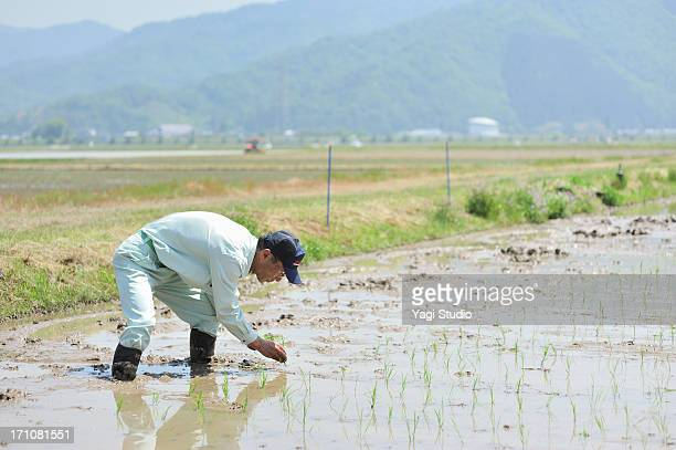 Japanese farmer Working in Rice planting in Hyogo