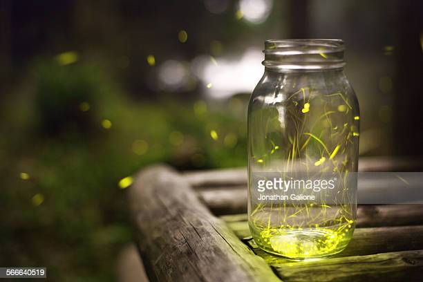 japanese fireflies - firefly stock pictures, royalty-free photos & images