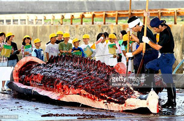 Japanese Fishermen slaughter a 995m Baird's Beaked whale at Wada Port on June 21 2007 in Chiba Japan Under the coastal whaling program Japan is only...