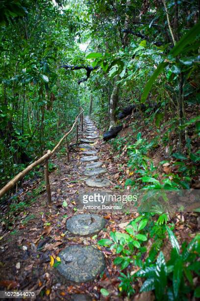japanese footpath for tourists in sabang forest, palawan island, philippines - palawan island stock pictures, royalty-free photos & images