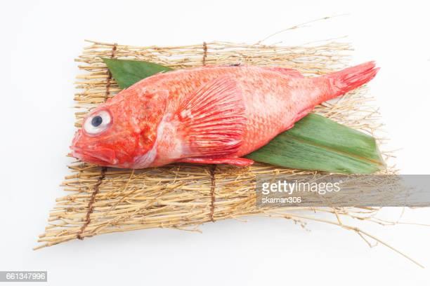 japanese fresh Kinki fish