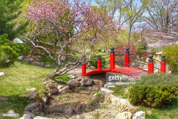 Japanese garden bridge in park