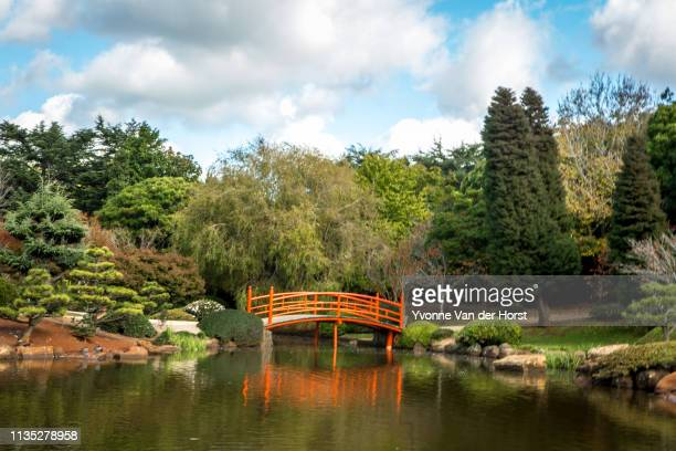 japanese garden in a  public park in toowoomba - 日本庭園 ストックフォトと画像