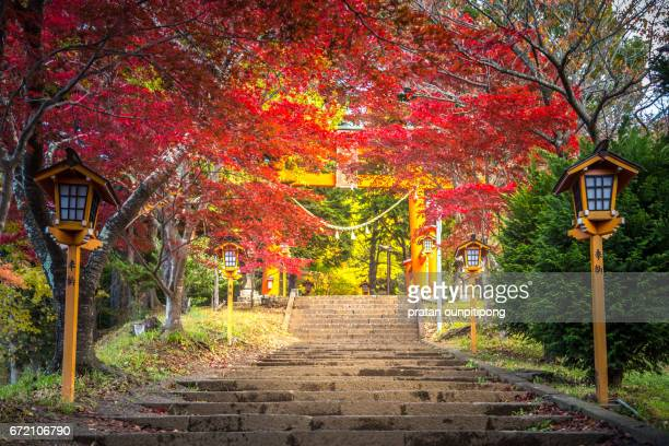 japanese garden in autumn - shrine stock pictures, royalty-free photos & images