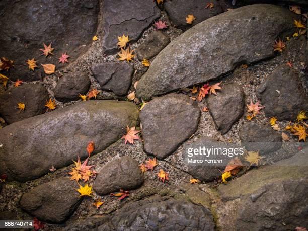 japanese garden in late autumn - wabi sabi - fotografias e filmes do acervo