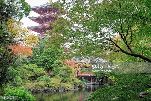 CONTENT] Japanese Garden in Sensoji Temple precinct with fivestorey pagoda in background Asakusa Taito Tokyo Japan