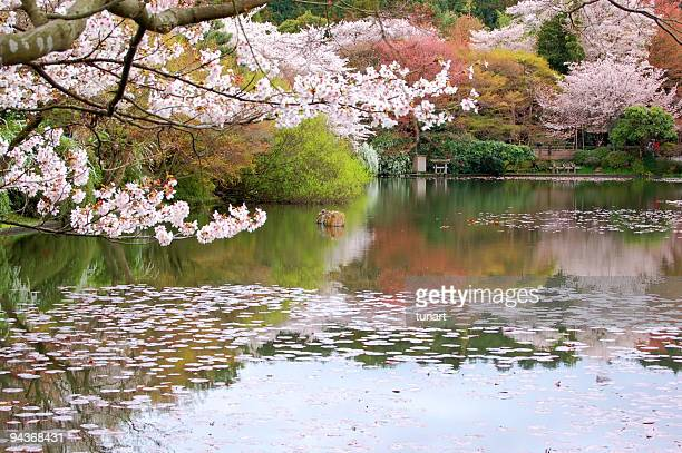 japanese garden, kyoto, japan - japanese garden stock photos and pictures