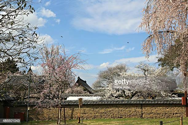 Japanese garden of Kyoto