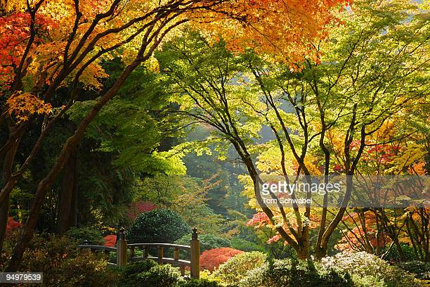 japanese garden - japanese garden stock photos and pictures