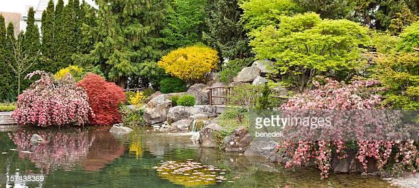 japanese garden with pond, kelowna, british columbia, canada - kelowna stock pictures, royalty-free photos & images