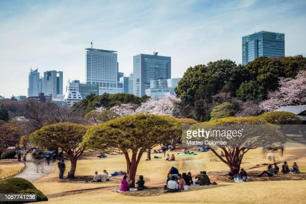 japanese garden with tokyo skyline in springtime, japan - hanami stock pictures, royalty-free photos & images