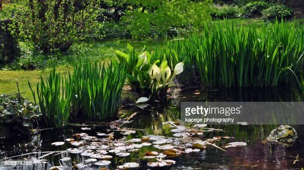 Japanese Gardens Leverkusen