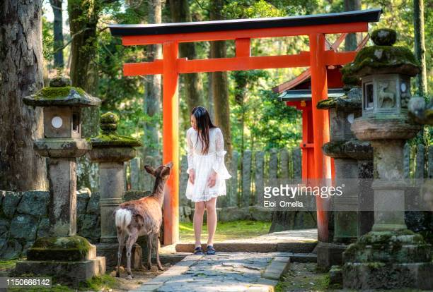 japanese girl and deer in front of torii at Nara Park, Japan