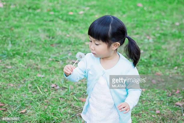 Japanese girl blowing dandelion