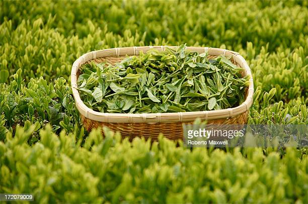 Japanese Green Tea Leaves