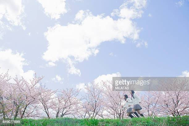 Japanese high school students who run the cherry tree in the back