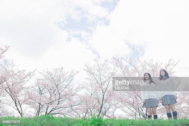 Japanese high school students who stand the cherry tree in the back