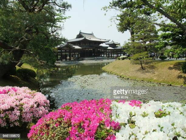 japanese historic temple 'byodo-in houo-do' - uji kyoto stock pictures, royalty-free photos & images