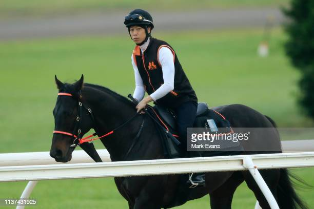 Japanese horse Kluger has a trot at Canterbury Park during dawn trackwork on March 22 2019 in Sydney Australia He's Eminent is entered in the Ranvet...