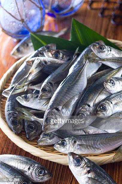 japanese horse mackerel - trachurus japonicus stock pictures, royalty-free photos & images