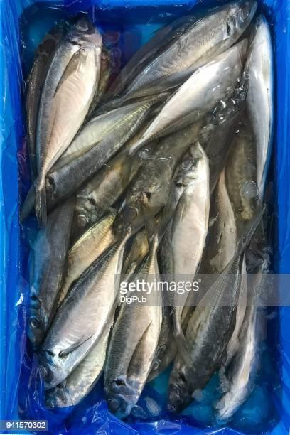 japanese horse mackerel - jack fish stock pictures, royalty-free photos & images
