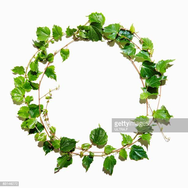 ivy wreath stock photos and pictures getty images
