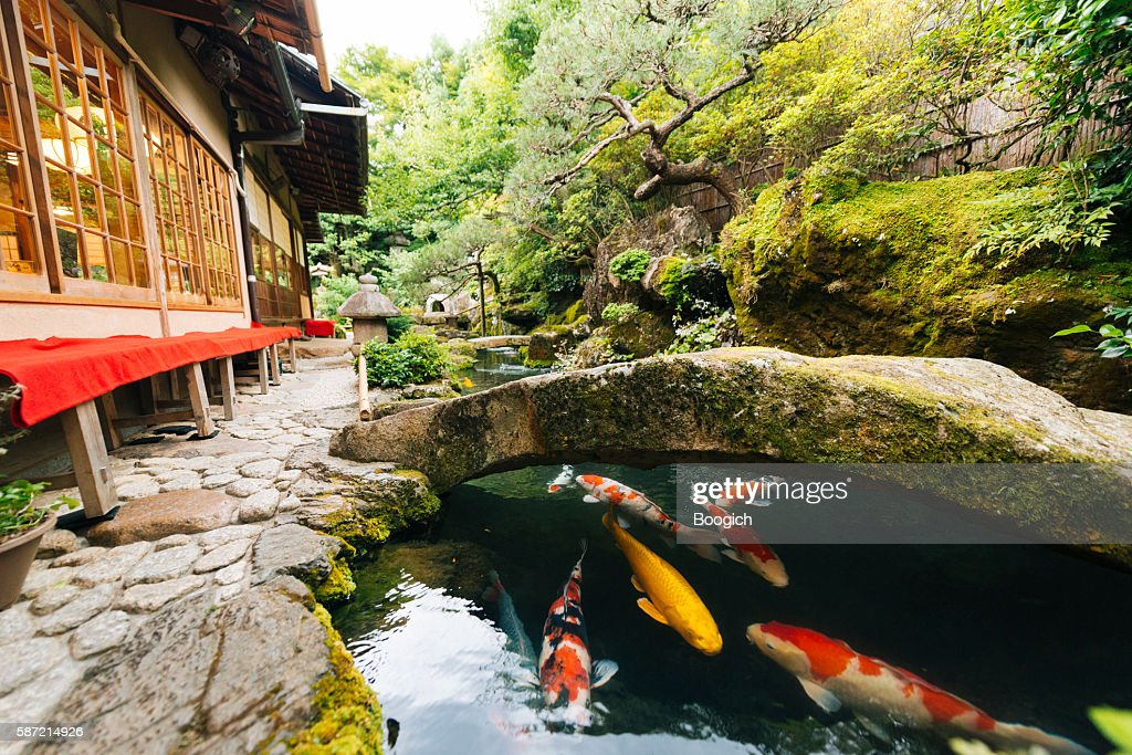 Japanese Koi Pond and Garden Outside Kyoto Japan Kissaten Restaurant : Stock Photo