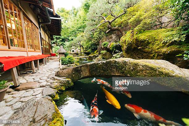 japanese koi pond and garden outside kyoto japan kissaten restaurant - kyoto prefecture stock pictures, royalty-free photos & images