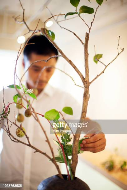 japanese man standing in flower gallery, working on ikebana arrangement. - ikebana stock pictures, royalty-free photos & images