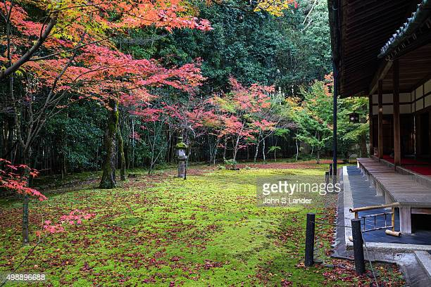 Japanese Maple and Autumn Colors at KotoIn Garden Daitokuji Kotoin was established in 1601 by Tadaoki Hosokawa a famous warrior under Toyotomi...