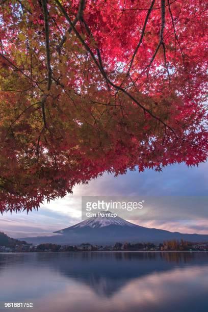 Japanese maple autumn leaves and mount fuji , yamanashi , japan