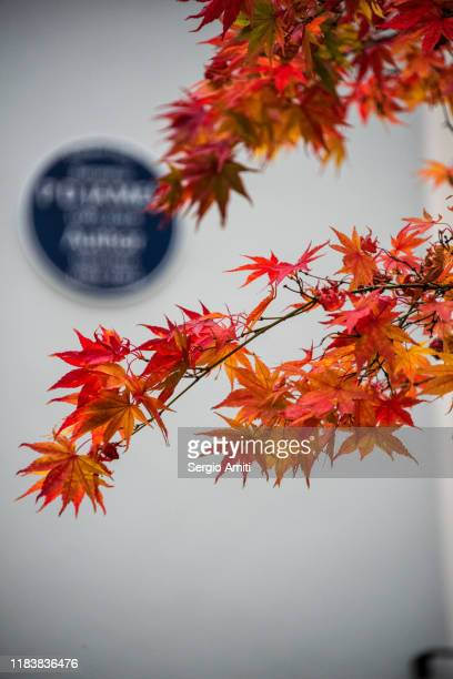 japanese maple leaves - memorial plaque stock pictures, royalty-free photos & images