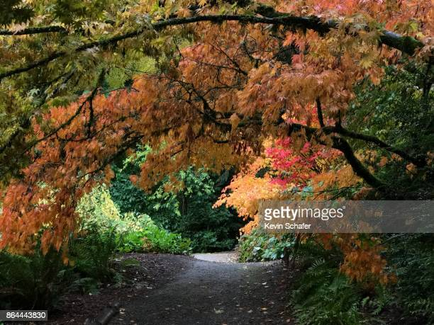 Japanese Maples, pathway, Seattle in the rain