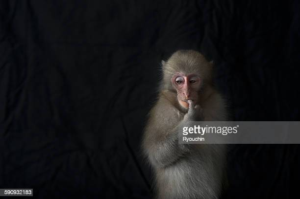 japanese monkey, monkey northern limit - primate stock pictures, royalty-free photos & images