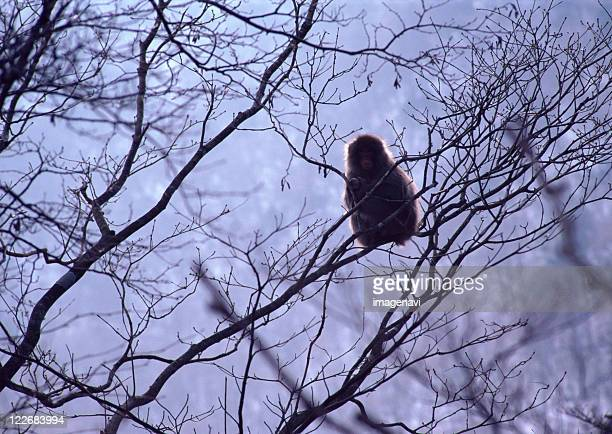 japanese monkey - nikko city stock pictures, royalty-free photos & images