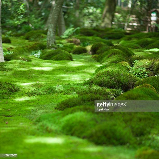 japanese moss garden, kyoto - japanese garden stock photos and pictures