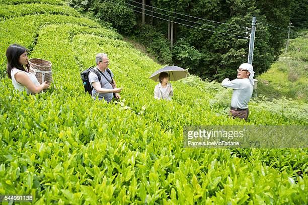 日本の農家にオーガニックのお茶を観光客の選び方リーブズ