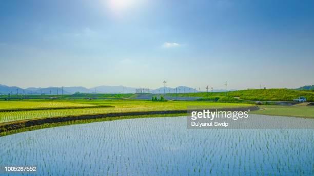 japanese paddy field image. japanese countryside. - paisajes de japon fotografías e imágenes de stock