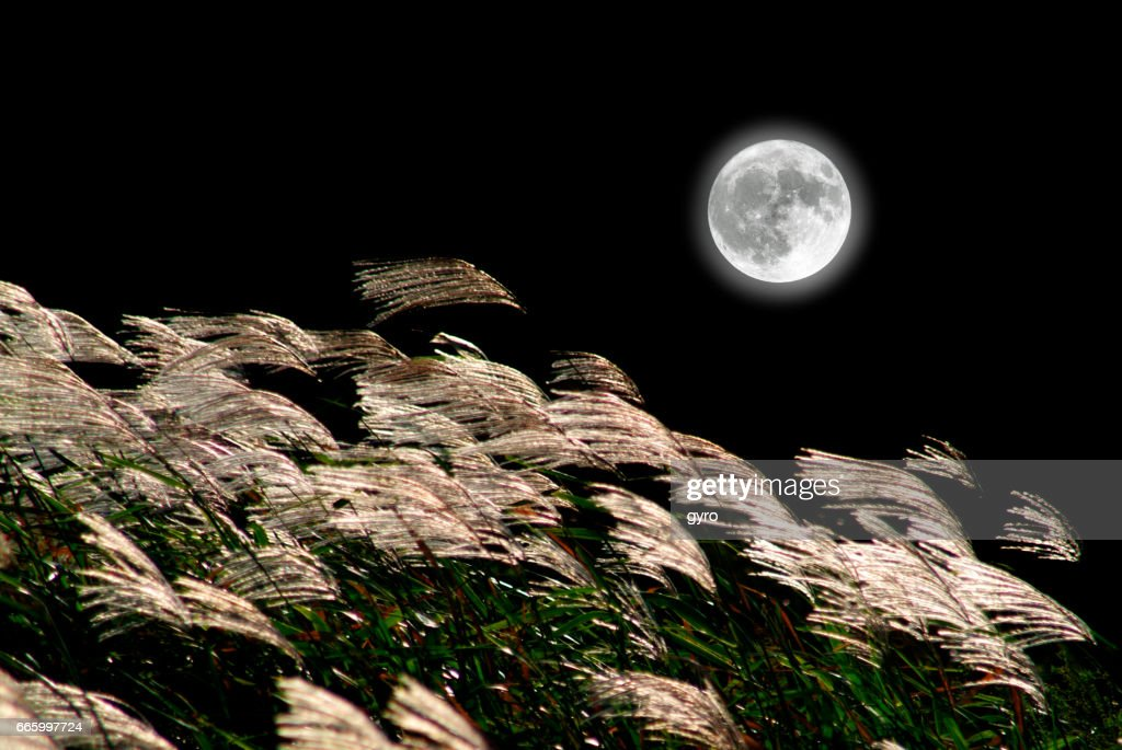 Japanese pampas grass and the Moon : Stock Photo