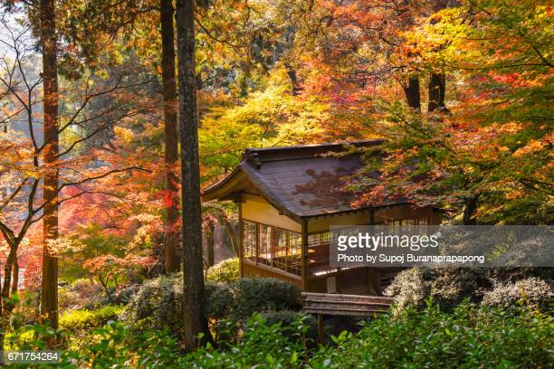 japanese pavilion in autumn with red maple tree in pine forest , japan