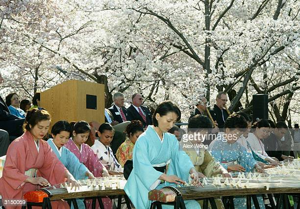 Japanese performers play kotos a Japanese musical instrument during a stone lantern lighting ceremony as part of the National Cherry Blossom Festival...
