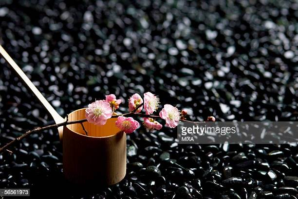 japanese plum and a ladle - wabi sabi - fotografias e filmes do acervo